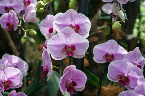 Orchids garden Singapore National Orchid Garden Singapore Poster