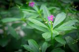 Little purple flowers in the green garden - 176732105