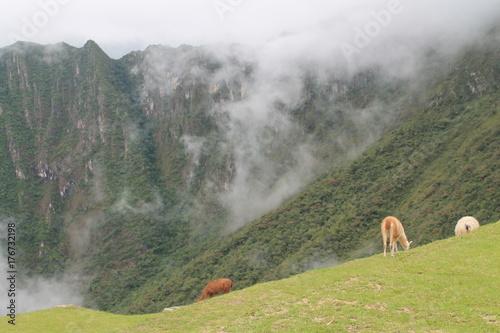 Fotobehang Pistache Machu Picchu