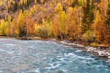river turquoise water birch autumn - 176734536