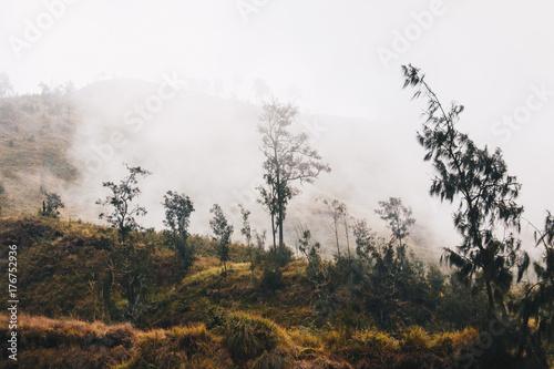foggy trees - 176752936