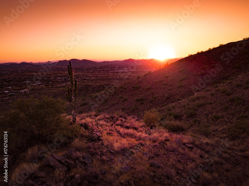 Foto op Plexiglas Chocoladebruin Sunset Cactus