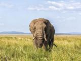 Safari Elephants in the Masai Mara - 176765536