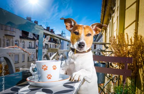 Papiers peints Chien de Crazy dog having a coffee break