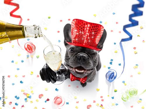 Papiers peints Chien de Crazy happy new year dog celberation