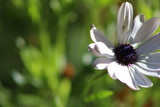 white flower - 176766967