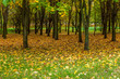 autumn city park - 176776731