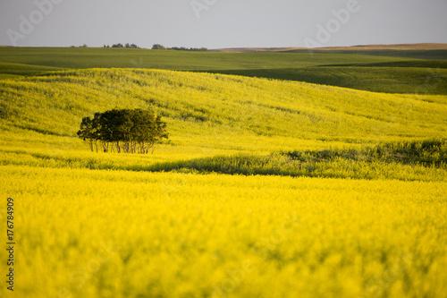 Papiers peints Melon Prairie Scene Saskatchewan