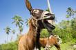 Donkey Funny Animals