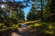 Path on Mt Lemmon Arizona