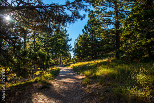 Poster Arizona Path on Mt Lemmon Arizona