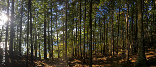 New Hampshire wooded pine forest along Lake Winnisquam - 176788384
