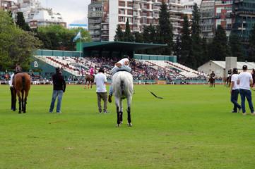 Cavalier et monture patientant lors d'un match de polo - 2