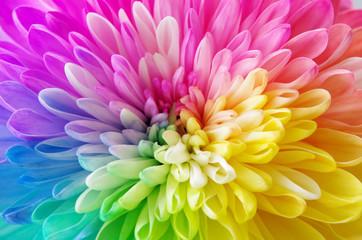 レインボーの花 © chi-