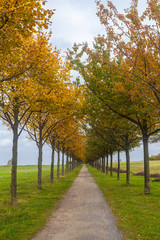Alleebäume in Herbstfarben