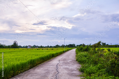 Fotobehang Purper road country farm rice in north Thailand