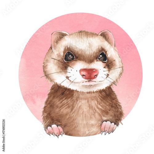 Cute ferret. Watercolor illustration - 176802326