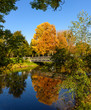 Bright color outdoor landscape photo taken on a sunny golden October autumn day with a yellow orange tree reflecting on the blue water of a river and a bridge