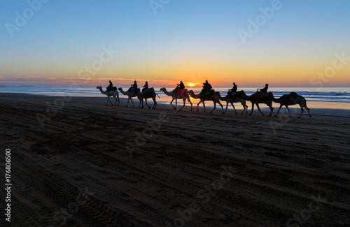 Fotobehang Kameel Camel caravan at beach at sunset . Essaouira.