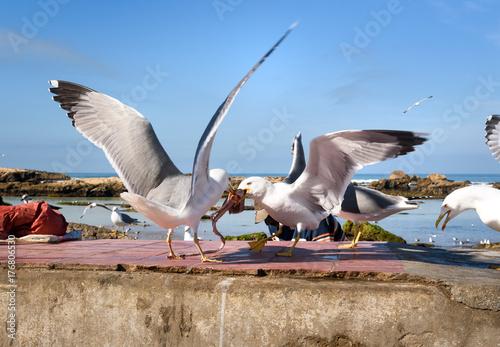 Fotobehang Marokko Seagulls in port, Essaouira, Morocco
