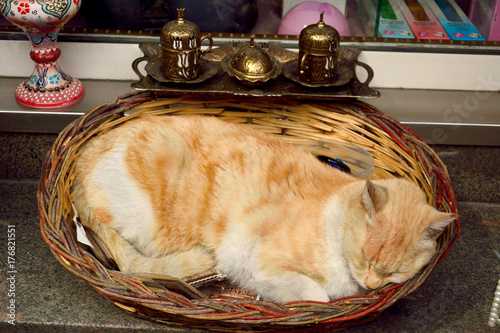 Brown cat sleeping in a basket Poster