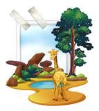 Giraffe standing in the savanna field - 176835966
