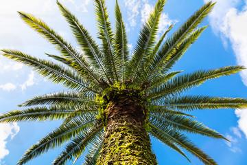 Palmeira e céu azul com nuvens.