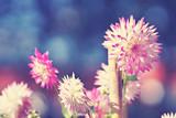 sonnige Blumenwiese im Herbst - 176839964