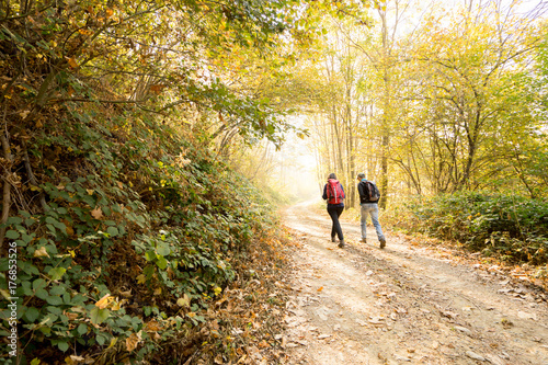 hikers walking path in the woodland Poster
