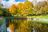 A pond in an autumn park reflecting yellow trees - 176859192