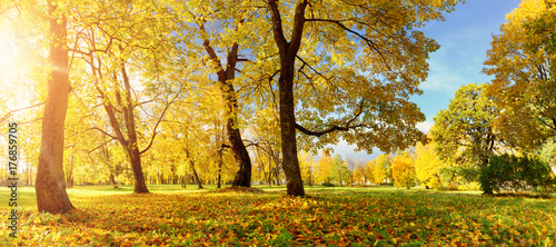Papiers peints Photos panoramiques trees with multicolored leaves in the park
