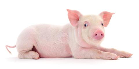 Pig on white © Anatolii