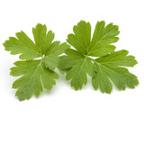 Fresh parsley herb leaves  isolated on white background - 176862369