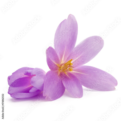 Fotobehang Iris lilac crocus flowers isolated on white background