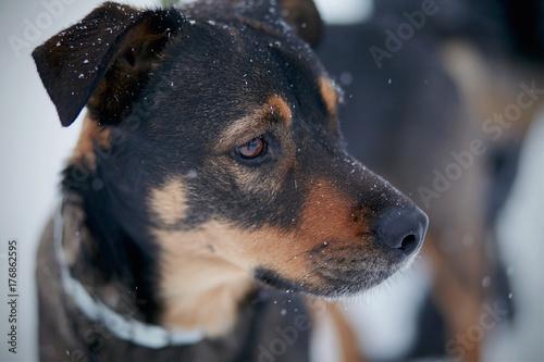 Portrait of not purebred dog
