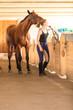 Jockey young girl petting brown horse - 176863335