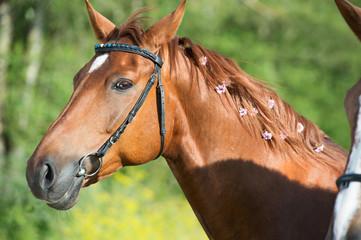 portrait of sportive chestnut horse at lake background. summer