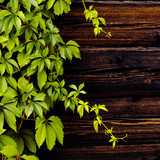 Rustic background. Wooden wall and plant.
