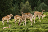 Deers near the Forest - 176890776