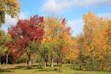 riot of autumn paints - 176898723