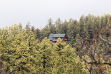 Cabin in Thick Forest - 176907906