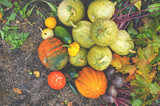 Beautiful mixed colors of ripe pumpkins lying on the grass on the farming plot to the day of Thanksgiving. - 176911794