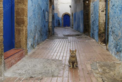 Papiers peints Maroc Little cat on a street of medina