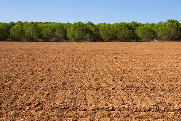 Terreno agricola de tierra arada con plantación de pinos