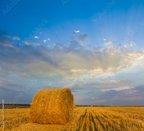 wheat field after a harvest with a haystack