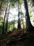 秋の森 - 176946569
