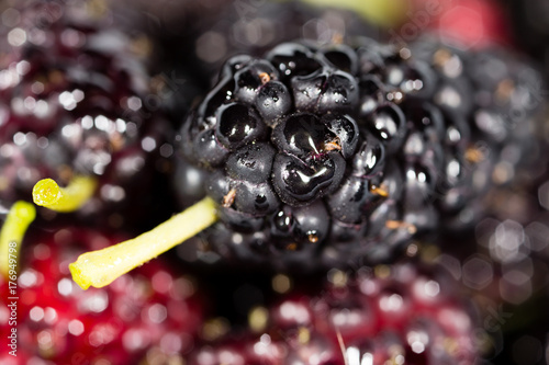 black mulberry berry as a background