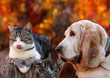 Dog and cat with autumn backgrounds