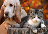 Dog and kitten with autumn backgrounds - 176949991