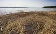 Reedy Canadian shoreline